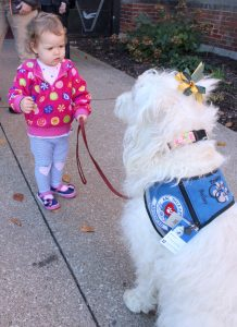 "Wearing her official ""jacket"" and nametag, Bailey allows Elizabeth Murtha, 2, to hold her leash while greeting parishioners after Mass outside Sacred Heart Church in Rock Island. (The Catholic Post/Jennifer Willems)"